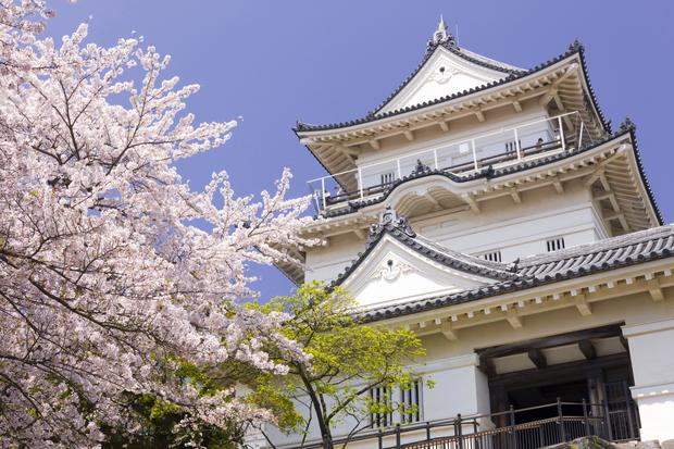 小田原城址公園桜や長興山しだれ桜の開花情報!駐車場や桜まつりは?