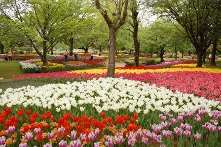 国営昭和記念公園フラワーフェスティバルの開花状況や駐車場は?