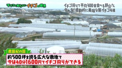 matuko-ichigo10