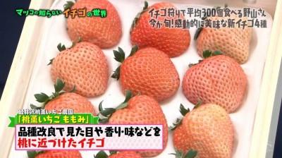 matuko-ichigo19