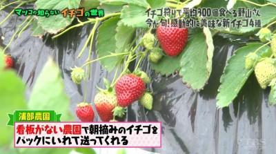 matuko-ichigo31